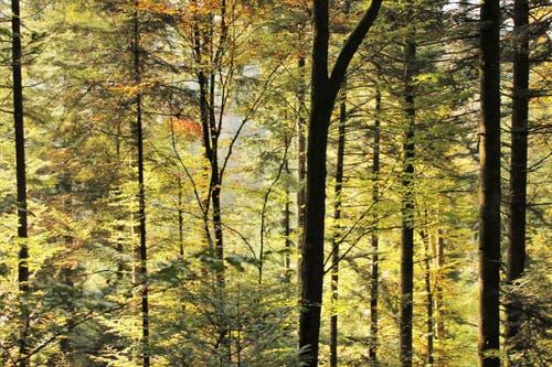 Wunderschöner Herbstwald. (Bild: Irene Wanner (Schötz, 18. Oktober 2018))