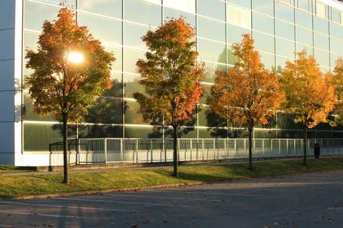 Farbenprächtiger Ahorn vor der kühlen Glasfassade der Sporthalle. (Bild: Heidi Bucher (Willisau, 10. Oktober 2018))