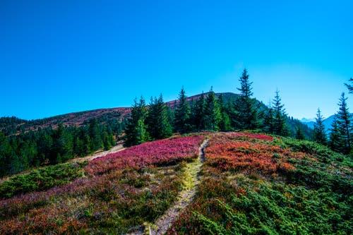 Kurz vor dem Gipfel, voller Farben. (Bild: Vinzenz Blum (Brisen, 20. Oktober 2018))