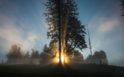 """""""Die Erleuchtung"""": Sonnenaufgang auf dem Zugerberg (Bild: Daniel Hegglin)"""