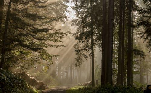 Sonnenstrahlen auf dem Zugerberg. (Bild: Daniel Hegglin (Walchwil, 19. Oktober 2018))