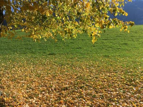 Herbst in der Landschaft (Bild: Isidor Affentranger (Auf dem Bruderklausenweg von Stans nach Flüeli-Ranft, 15. Oktober 2018)