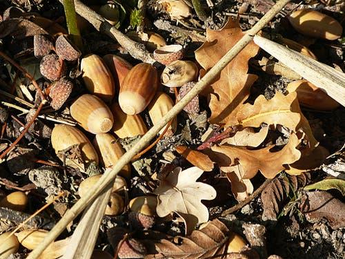 Herbstliches Stillleben. (Bild: Josef Lustenberger (Soppensee, 17. Oktober 2018))