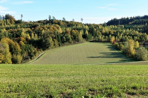 Agrar- und Waldgebiet beim Wannenhof, Unterkulm. (Bild: Josef Habermacher (Unterkulm, 24. Oktober 2018))
