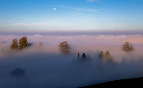 Morgenstimmung über dem Nebelmeer mit dem Mond am Himmel. (Bild: Daniel Hegglin)