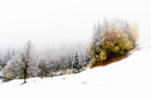 In die herbstlichen Farben mischt sich Weiss. (Bild: Anthony Anex/Keystone (Grindelwald, 28. Oktober 2018))
