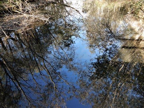 «Mein bester Freund ist und bleibt mein Spiegel, er hat noch nie gelacht als ich geweint habe.» Ja, auch diese Bäume im Reussdelta in Flüelen widerspiegeln sich so wunderschön, wie sie tatsächlich sind. (Bild: Margrith Imhof-Röthlin (Flüelen, 29. Oktober 2018))