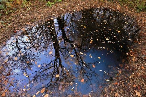 Gespiegelte Herbststimmung. (Bild: André Egli, 30. Oktober 2018)