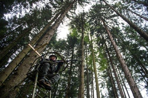 Der höchste Luzerner Jäger, Peter Küenzi, späht vom Hochsitz aus in den Wald.