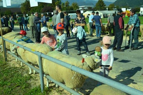 Der Kontakt mit Schafen ist für die Kinder immer ein unvergessliches Erlebnis. (Bild: Paul Küchler (Oberdorf, 7. Oktober 2018))