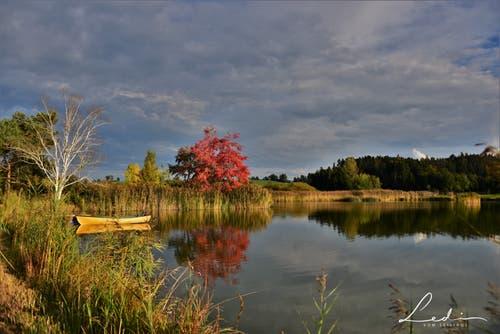 Traumhafte Herbstfarben im Abendlicht. (Bild: Alfred Herzog (Ostergauermoos, 8. Oktober 2018))