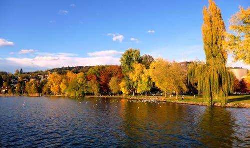 Herbststimmung bei der Wiese Beim Verkehrshaus. (Bild: Walter Buholzer (Luzern, 31. Oktober 2018))