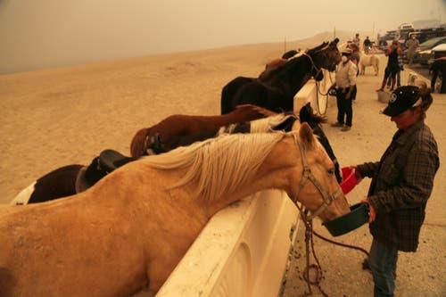 Besitzer füttern ihre Pferde in der Evakuierungszone am Zuma Beach in Malibu. (Bild: Reed Saxon/AP (Malibu, 9. November))