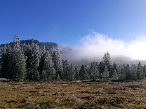 Der Sonnenschein, der Reif an den Bäumen und der Nebel erzeugen eine mystische Herbststimmung auf dem Glaubenberg. (Bild: Urs Gutfleisch (Glaubenberg, 17. November 2018))
