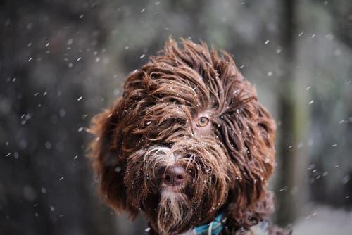 Die acht Monate alte Babette im Schneetreiben. (Bild: Alfred Herzog (Napfgebiet, 19. November 2018))