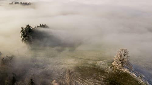 Nebelstimmung auf dem Zugerberg. (Bild: Daniel Hegglin (Zugerberg, 21. November 2018))