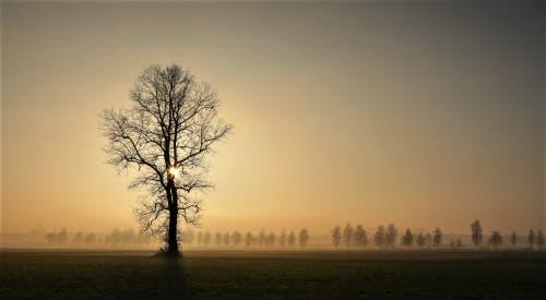 Nebelige Landschaft über dem Moos, doch auch die Sonne kann sich noch kurz behaupten. (Bild: André Egli (Ettiswil, 22. November 2018))
