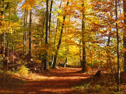Langentalerwald in Gelfingen. Bild: Rita Räber, 25. November 2018