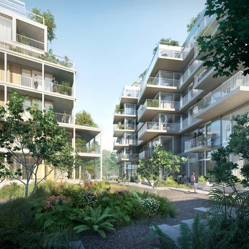 Geplant sind diverse Wohnhäuser mit grossen Fensterflächen und viel Grün drumherum.