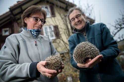 Links hält Käthy Maurer einen Neuankömmling in den Händen, Evelyne Noser präsentiert ein wieder genesenes Exemplar. (Bild: Pius Amrein (Ebikon, 22. November 2018))