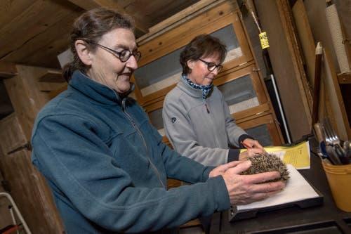 Ab auf die Waage: Ein gesunder Igel sollte in unserer Höhenlage mindestens 600 Gramm wiegen. (Bild: Pius Amrein (Ebikon, 22. November 2018))