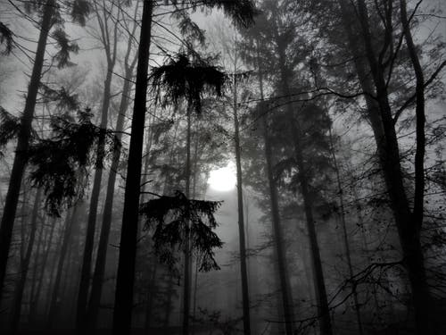 Schafft die Sonne den Durchbruch oder eher nicht? Trotzdem ist dieser Baumwipfelpfad in Mogelsberg für Jung und Alt ein wunderschönes Erlebnis. (Bild: Margrith Imhof-Röthlin (Mogelsberg, 25. November 2018))