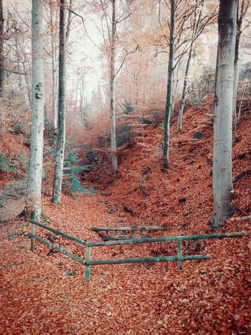 Märchenstimmung im Wald. (Bild: Larisa Gheorghe (Horw, 29. November 2018))