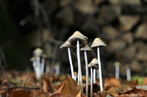 Pilze im Wald. (Bild: Irene Wanner (Knutwil, 7. November 2018))
