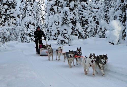 Die Hundeschlitten-Safari ist ein Höhepunkt jeder Tour durch das winterliche Finnland.