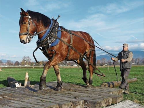 Das Burgdorferpferd Othello mit Andreas Giger auf einem der zahlreichen Hindernisse des Übungsparcours. (Bild: Bilder: Ulrike Huber)