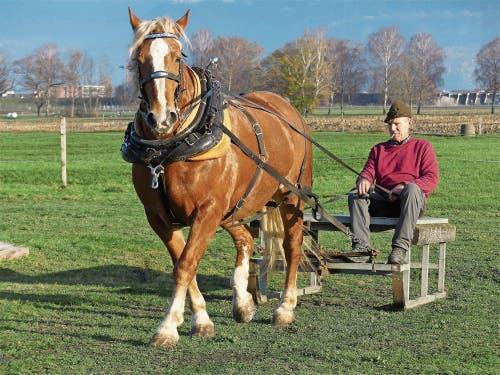 Hufschmid Otto Waibel aus Balgach mit seiner Stute Sunshine beim entspannten Ziehen des Holzschlittens.