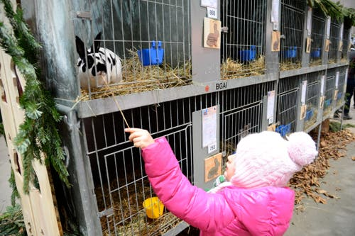 Diese kleine Besucherin zeigt besonderes Interesse am Kaninchen.