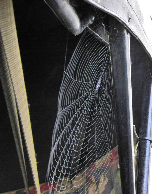 Ein Spinnennetz zwischen Rücksitz und Dachgestänge als blinder Passagier. (Bild: PD)