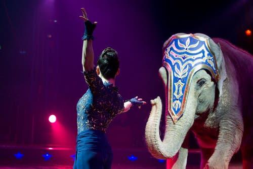Die Elefanten stehen immer im Vordergrund. Linna Knie-Sun als charmante Begleiterin der sensiblen Dickhäuter in der letztjährigen Darbietung. (Bild: PD)