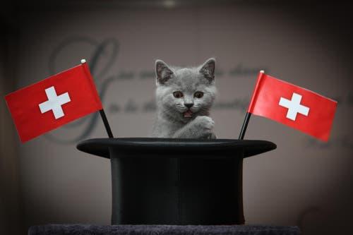 Unsere persönliche Katzenfanmeile... (Bild: Ronny Karbe)