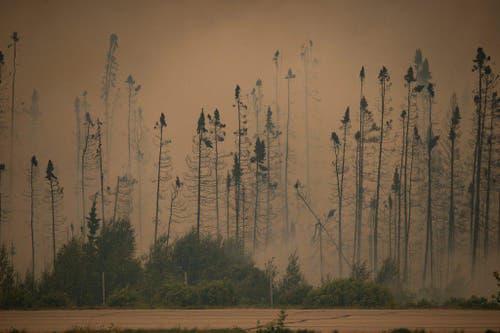 Die Bäume sind zerstört. Nach dem Grossbrand in der Nähe von La Ronge in Kanada liegt eine Nebelschicht in der Luft. (Bild: AP / Corey Hardcastle)