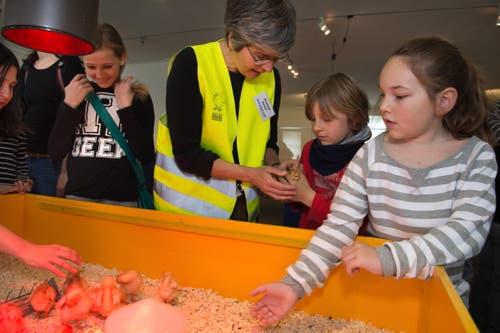 Elisabeth Danner, Mitarbeiterin des Naturmuseum, zeigt den Kindern den behutsamen Umgang mit den Küken. (Bild: Eveline Beerkircher / Neue LZ)