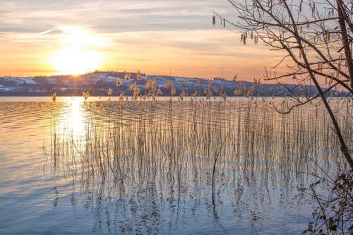 Wintersonne am Sempachersee (Bild: Priska Ziswiler)
