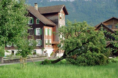 Das Gewitter mit Sturmböen hat am 6. August ganze Bäume ausgerissen. Hier in Oberdorf. (Bild: Oliver Mattmann / Neue NZ)