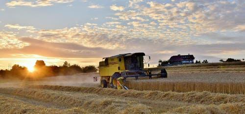 Weizenernte - Bei diesem Wetter sind die Mähdrescher bis spätabends auf den Feldern, hier in Grosswangen. (Bild: Hedy Muff-Ruckli)