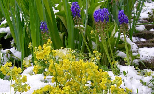 WINTER IM FRÜHLING ... War das nun der letzte Schnee? Oder gibt's noch weitere weisse Tage? Aufenommen in Emmenbrücke. (Bild: Leser Heinz Schürmann)
