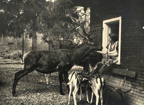 Frau Schindelholz kümmerte sich aus dem Kassenhäuschen heraus nicht nur um die bezahlenden Besucher. (Bild: pd / Tierpark Goldau)
