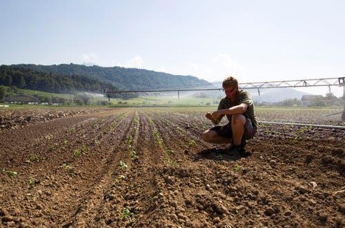 6. August 2013: Die grosse Hitze machte vor allem den Gemüsebauern in diesem Jahr zu schaffen. Die Bauern mussten ihre Felder zusätzlich bewässern. Hier im Bild: Gemüsebauer Linus Ammann in Littau. (Bild: Manuela Jans / Neue LZ)