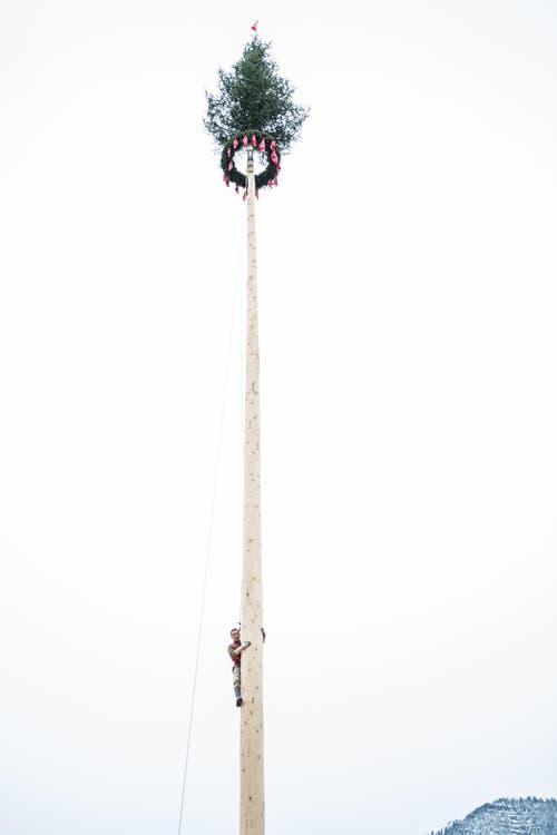 Im Bild Roger Niederberger aus Merlischachen, der als erster Kletterer die 40 Meter hohe Tanne hochgeklettert ist. (Bild: Roger Grütter (LZ))