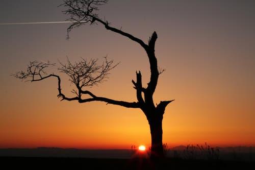 Frühmorgens wenn der Tag erwacht. (Bild: Irene Wanner)