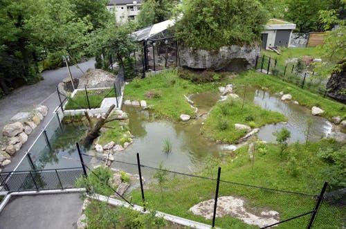 Immer wieder gelingt es dem Tierpark, neue Attraktionen zu eröffnen – 2012 war es die Fischotteranlage. (Bild: pd / Tierpark Goldau)