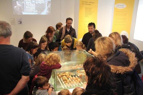 Die Besucher verfolgen, was sich im Schaukasten mit den Eiern tut. (Bild: Ramona Geiger / luzernerzeitung.ch)