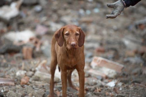 Im Bild Hund Nanya während der Prüfung. (Bild: Corinne Glanzmann (Neue LZ))