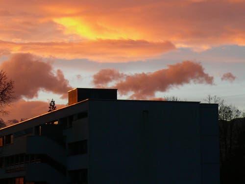 Wolf und Fuchs fliehen vor der Morgendämmerung. (Bild: Büsy Lingg)