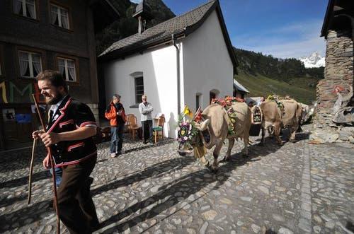 14. September 2013: Alljährlich findet der Alpabzug vom Meiental nach Wassen statt - der grösse des Kantons Uri. In der ganzen Zentralschweiz sind solche Abzüge zu bewundern. (Bild: Urs Hanhart / Neue UZ)